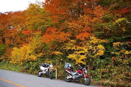 バイクが好きだ。日本の四季が好きだ。