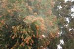飛び散るスギ花粉