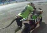 2016年は申年! 猿 が バイク に乗る映像!!