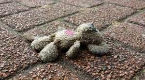 ライダーとして何をするべきか?大津市の幼児死亡事故に思うこと